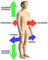 common anatomy terms directional