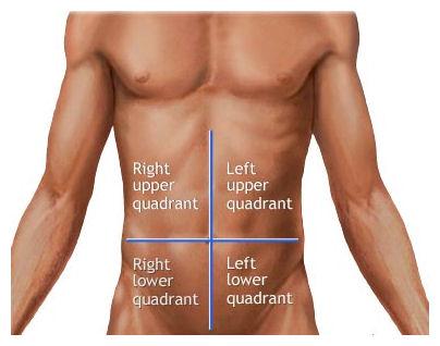 commonanatomytermsquadrants